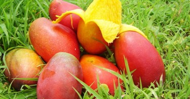 capital del mango