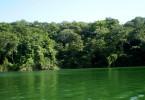 bosque_humedo